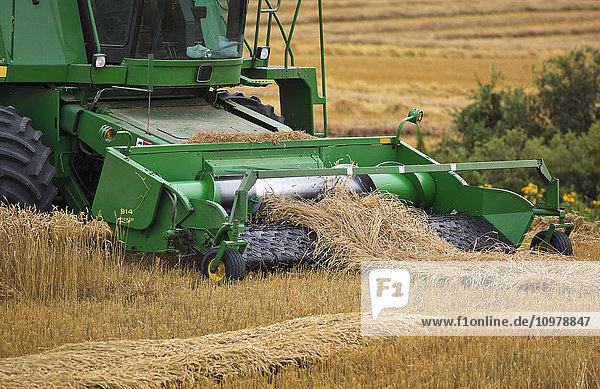 'Combine harvesting wheat on the Canadian Prairie  near Winkler; Manitoba  Canada'