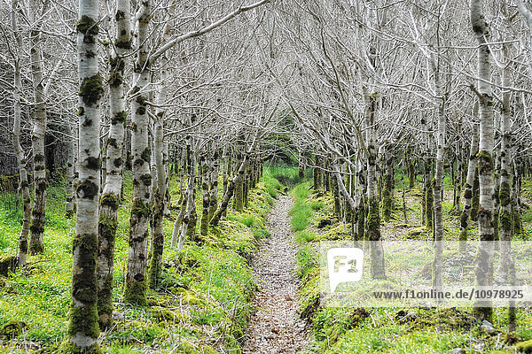 'Path through the woods to Kylemore Abbey; Connemara  County Galway  Ireland'