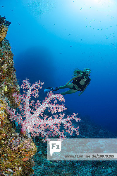 'Diver and alcyonarian coral; Fiji'