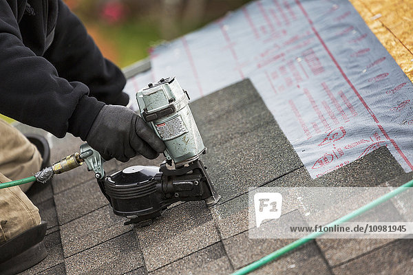 'Close up of air nailer  with male roofer nailing new shingles on top of roof; Calgary  Alberta  Canada'
