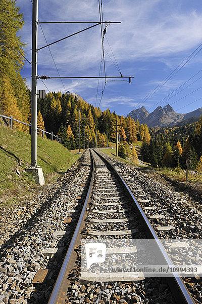 Railroad Tracks in Autumn  Preda  Albula Pass  Grisons  Switzerland