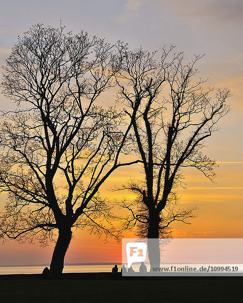 People UnderneathTrees at Sunset  Lake Constance  Lindau  Baden Wurttemberg  Germany