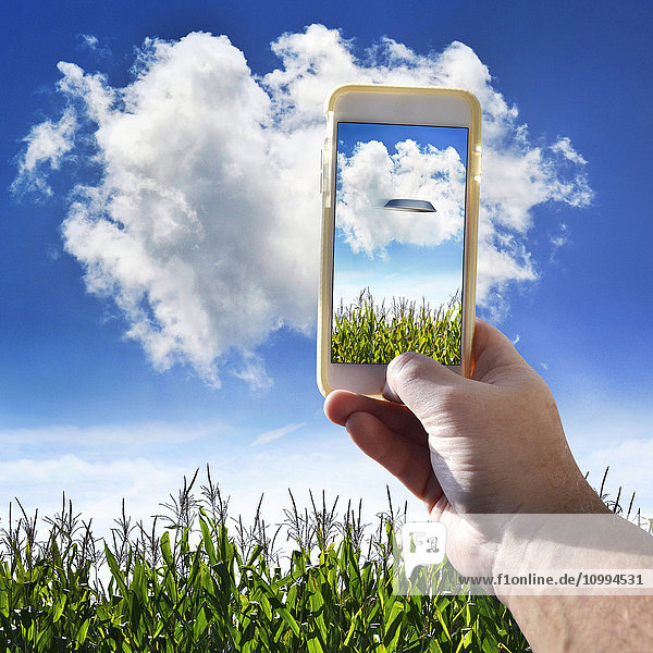 Hand Holding Cell Phone in Cornfield