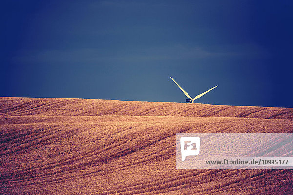 Wind turbine blades sticking up above cut grain field  Canada