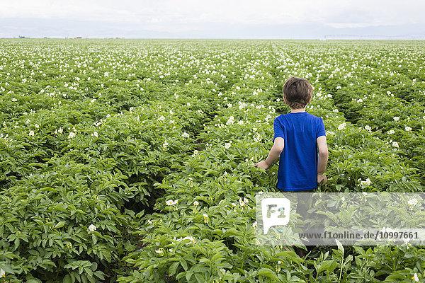 Boy (6-7) walking in field