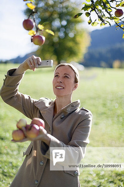 Austria  Salzburger Land  Maria Alm  Mature woman photographing apples on tree