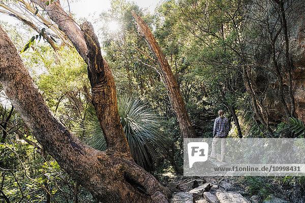 Australia  New South Wales  Blue Mountains National Park  Mature woman walking through mountain rainforest