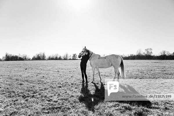Affectionate woman kissing horse on field against clear sky