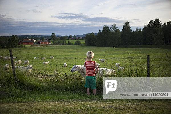 Boy looking at sheep on pasture