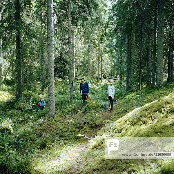 Mother with children picking mushrooms in forest