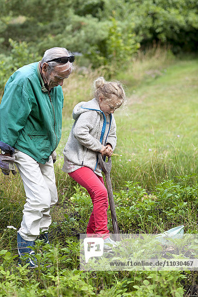 Grandfather and granddaughter working in garden