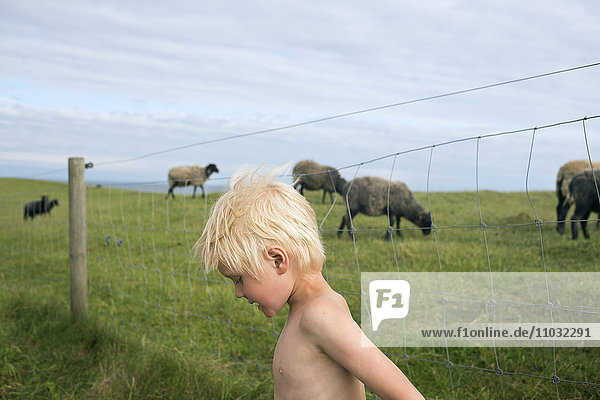A boy at a pasture with sheep