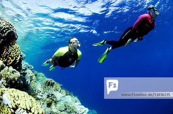 Two people snorkling  Egypt.
