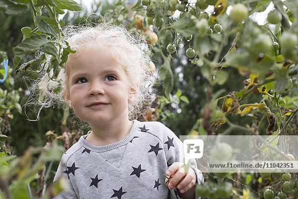 Kleines Mädchen im Gemüsegarten