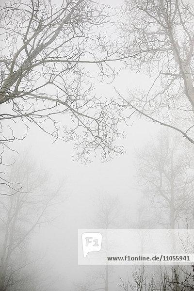 Bäume mit nackten Ästen im Winter durch dichten Nebel im Winter gesehen.