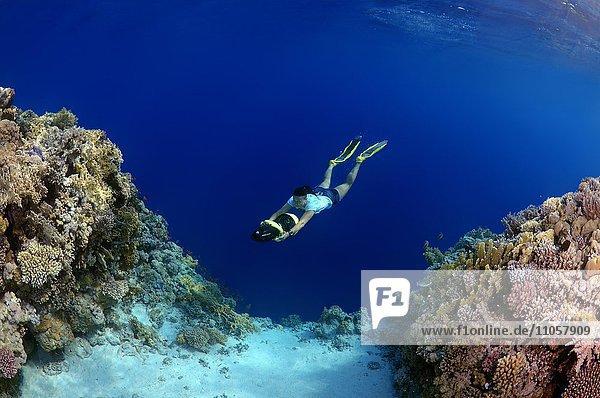 Apnoetaucher  Freitaucher mit Unterwasser-Scooter  Nachttauchen  Rotes Meer  Ägypten  Afrika