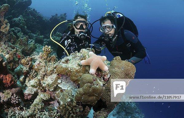 Young couple  divers looking at granulated sea star (Choriaster granulatus)  Indian Ocean  Maldives  Asia