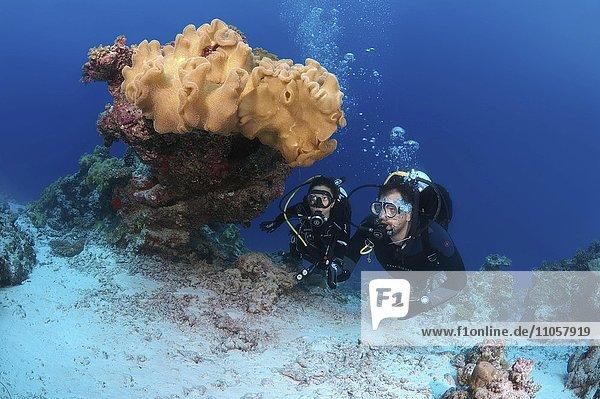 Zwei Taucher betrachten Korallen  Indischer Ozean  Malediven  Asien