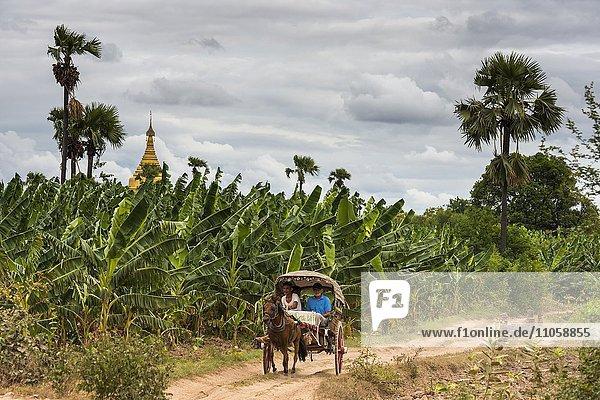 Pferdekutsche mit Touristen auf einem Weg vor Bananenstauden  hinten antike Stadt Inwa oder Ava  Mandalay-Division  Myanmar  Burma  Birma  Asien
