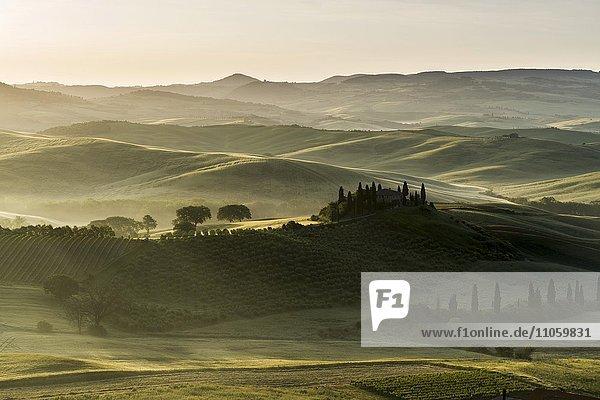 Typische Landschaft der Toskana im Val d'Orcia  Haus auf einem Hügel  Felder und Zypressen (Cupressus sp.)  Bäume und Morgennebel bei Sonnenaufgang  San Quirico d'Orcia  Toskana  Italien  Europa