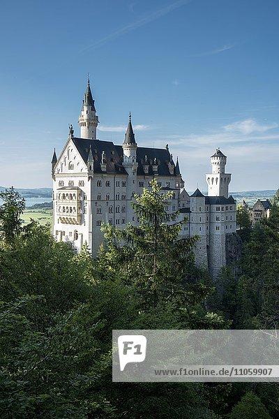 Schloss Neuschwanstein  Hohenschwangau  Bayern  Deutschland  Europa
