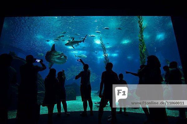 Besucher stehen vor Meeresaquarium  Mondfische und Haie im Becken des Ozeanarium im Park der Nationen  Parque das Nações  Lissabon  Portugal  Europa
