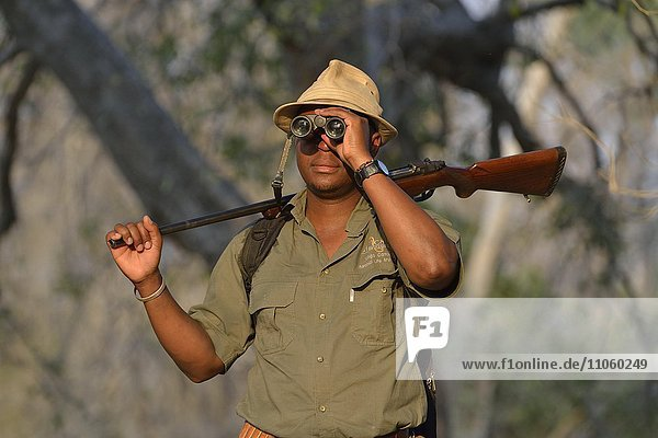 Guide mit Fernglas und Gewehr auf einer Fußsafari  Mana Pools Nationalpark  Provinz Mashonaland West  Simbabwe  Afrika