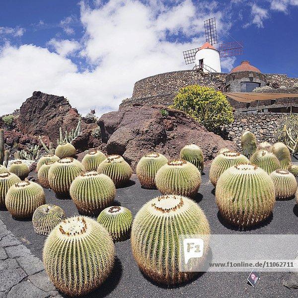 Kakteengarten Jardin de Cactus von Cesar Manrique  Guatiza  Lanzarote  Kanarische Inseln  Spanien  Europa