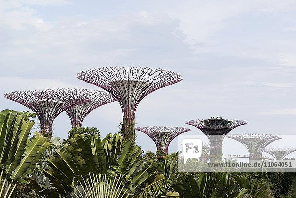 Supertree Grove  Gardens by the Bay  Singapur  Asien