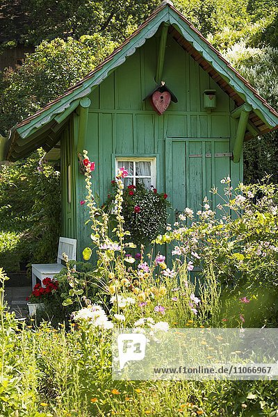 Gartenhäuschen und sommerlicher Blumengarten  Meersburg  Bodensee  Baden-Württemberg  Deutschland  Europa