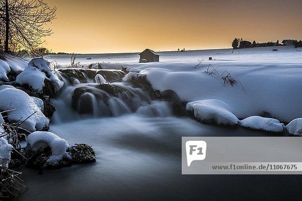 Bach in winterlicher Landschaft bei Sonnenuntergang  Unteregg  Unterallgäu  Bayern  Deutschland  Europa