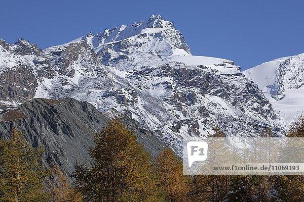 Findelntalim Herbst mit Rimpfischhorn mit Schnee  Zermatt  Wallis  Schweiz  Europa
