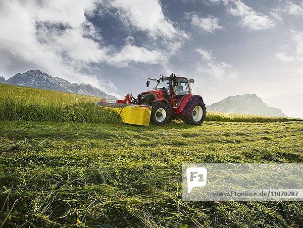 Traktor mäht bei Sonnenaufgang ein Feld  Söll  Kaisergebirge  Tirol  Österreich  Europa Traktor mäht bei Sonnenaufgang ein Feld, Söll, Kaisergebirge, Tirol, Österreich, Europa