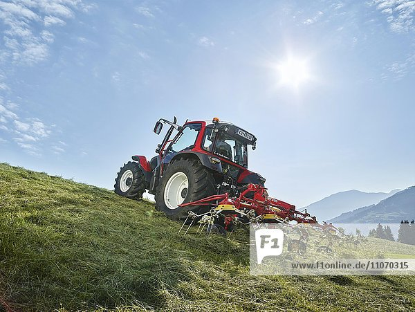 Traktor wendet mit einem Heuwender das frisch gemähte Gras  Hopfgarten  Brixental  Tirol  Österreich  Europa
