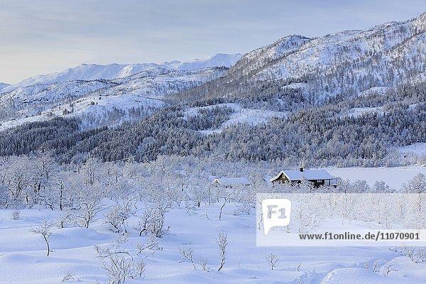 Winterlandschaft  Wohnhaus zwischen schneebedeckten Bäumen  Kanstadfjord  Insel Hinnøya  Nordland  Norwegen  Europa