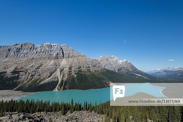 Türkiser Gletschersee Peyto Lake  Banff Nationalpark  kanadische Rocky Mountains  Alberta  Kanada  Nordamerika