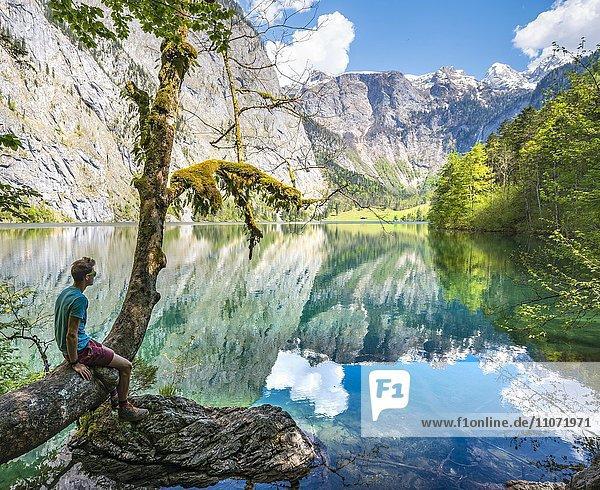 Junger Mann sitzt auf einem Baum über dem Wasser und blickt in die Ferne  Obersee mit Wasserspiegelung  Salet am Königssee  Nationalpark Berchtesgaden  Berchtesgadener Land  Oberbayern  Bayern  Deutschland  Europa