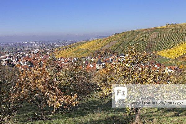 Ortsteil Strümpfelbach mit Weinbergen im Herbst  Weinstadt  Baden-Württemberg  Deutschland  Europa