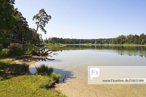 Großer Ostersee  Naturschutzgebiet Osterseen  Iffeldorf  Pfaffenwinkel  Fünfseenland  Oberbayern  Bayern  Deutschland  Europa