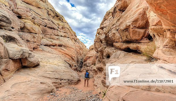 Wanderin geht durch eine Schlucht  Canyon  Rot orange Sandsteinfelsen  Wanderweg  Valley of Fire State Park  Nevada  USA  Nordamerika