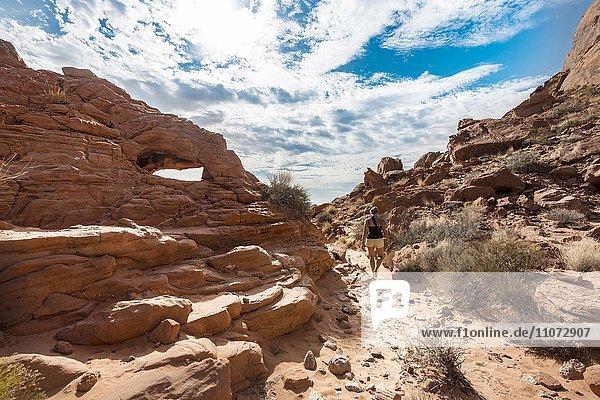 Wanderin geht den Rainbow Vista Trail,  Rot orange Sandsteinfelsen,  Wanderweg,  Steinwüste,  Valley of Fire State Park,  Nevada,  USA,  Nordamerika