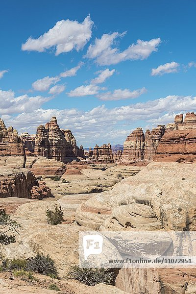 Felsnadeln,  Felsplateau,  Felsformationen The Needles District,  Canyonlands Nationalpark,  Utah,  USA,  Nordamerika