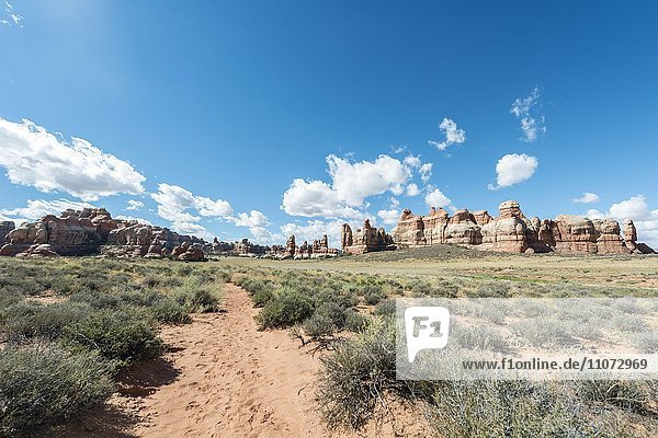 Wanderweg durch Felsformationen  The Needles District  Canyonlands Nationalpark  Utah  USA  Nordamerika