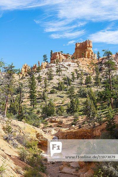 Kleiner Wasserfall  Felslandschaft mit Hoodoos  Mossy Cave Trail  Bryce Canyon Nationalpark  Navajo Trail  Erosionsformen  Utah  USA  Nordamerika