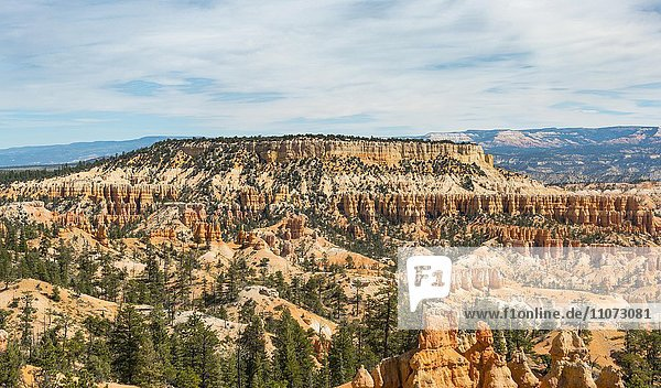 Farbige Gesteinsformationen  Hoodoos  Bryce Canyon Nationalpark  Utah  USA  Nordamerika