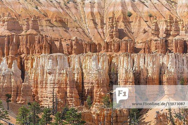 Farbige Gesteinsformationen  Hoodoos  Felsnadeln  Bryce Canyon Nationalpark  Utah  USA  Nordamerika