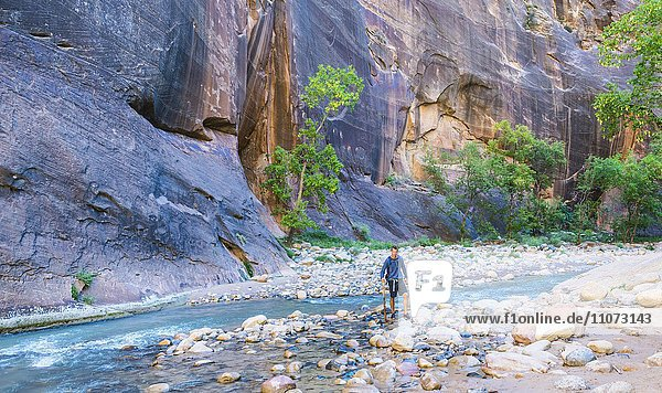 Wanderer steht im Fluss  Zion Narrows  Engstelle des Virgin River  Steilwände des Zion Canyon  Zion Nationalpark  Utah  USA  Nordamerika
