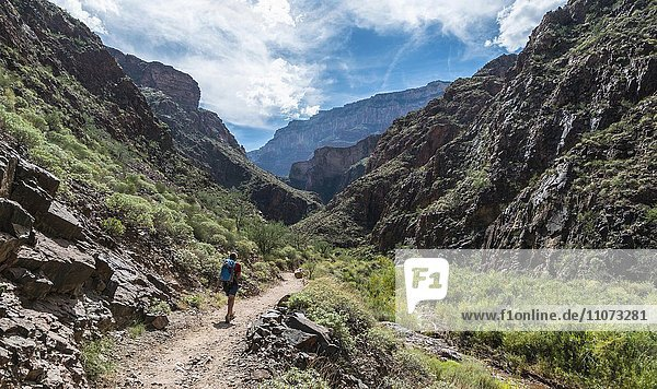 Wanderin auf dem Bright Angles Trail  Grand-Canyon-Nationalpark  Arizona  USA  Nordamerika