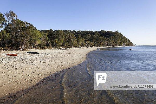 Sandstrand  UNESCO Weltnaturerbe  Fraser Island  Great Sandy National Park  Queensland  Australien  Ozeanien