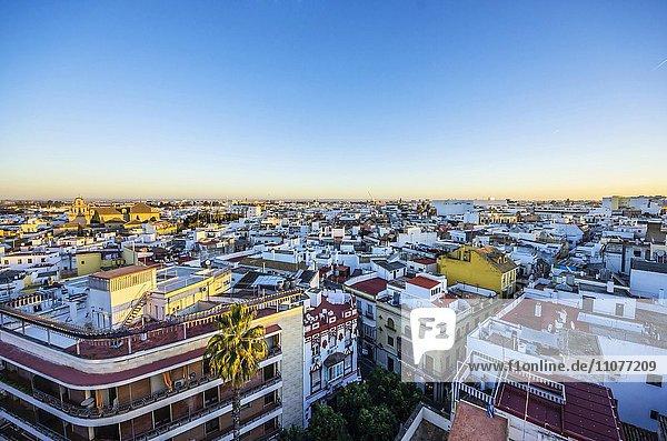 Ausblick auf die Stadt Sevilla  Provinz Sevilla  Andalusien  Spanien  Europa